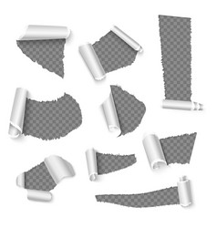 torn papers with curls holes in the paper vector image
