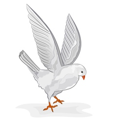 White pigeon in flight wite dove symbol peace vector