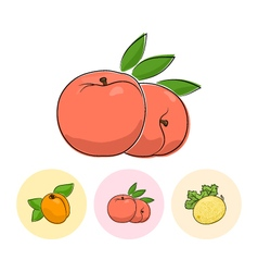 Fruit icons peach apricot melon vector