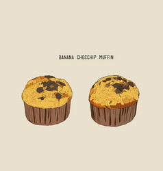 Banana chocolate chip muffins in paper cases vector