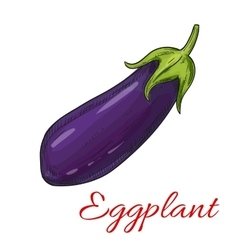 Sketched eggplant or aubergine vegetable vector