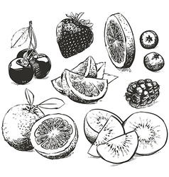 Hand drawn collection of fruits sketch vector