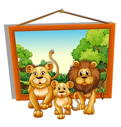 Photo frame of lion family vector