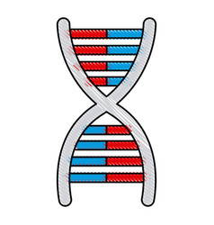 drawing dna molecule chromosome biology genetic vector image