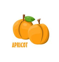 Logo apricot farm design vector
