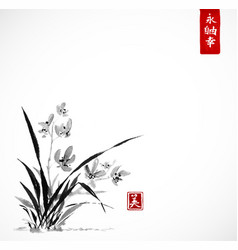 wild orchid on meadow vector image vector image
