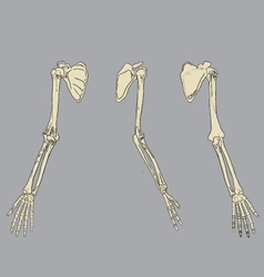 Human arm skeletal anatomy pack vector