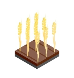Yellow wheat ears on the field isometric 3d icon vector