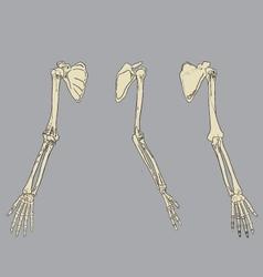 Human arm skeletal anatomy pack vector