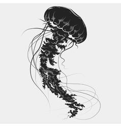 Hand drawn graphic jellyfish vector image
