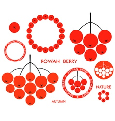 Rowan berry vector