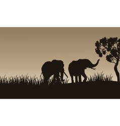 African elephant walking of silhouette vector