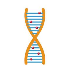 human dna and molecule symbol for medicine vector image vector image