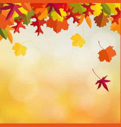 autumn fall card invitation with maple and oak vector image