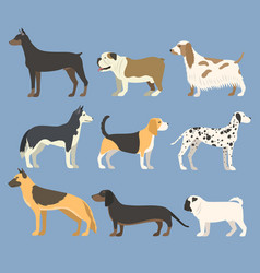 Dog pet character bread in flat style puppy pet vector