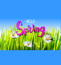 Hello spring banner with grass and chamomile vector