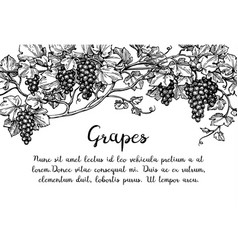 grapevine ink sketch vector image vector image