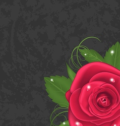 Beautiful rose isolated on grunge background vector image