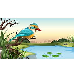 A river kingfisher vector