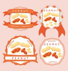 The theme peanut vector