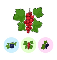 Fruit icons redcurrant  blackberry blackcurran vector