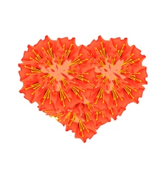 Scarlet flame bean flowers in a heart shape vector