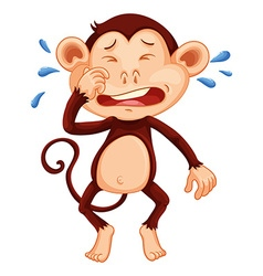 mn monkey crying vector image