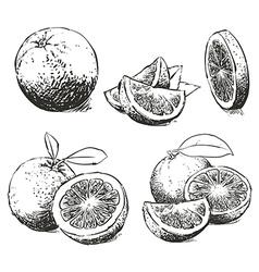 Orange Isolated sketch vector image