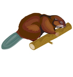 beaver vector image vector image