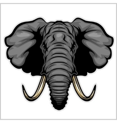 Elephant head Isolated on white vector image