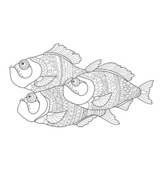 Piranha coloring book for adults vector image vector image