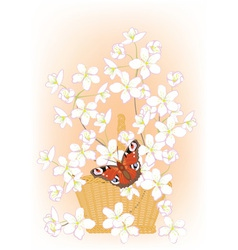 flowering branches of cherry in a basket vector image