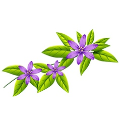 A flowering plant vector