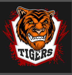 tigers mascot - sport team vector image