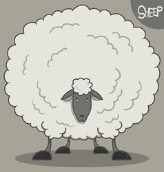 fluffy white sheep vector image