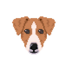 jack russell dog head in pixel art style vector image vector image