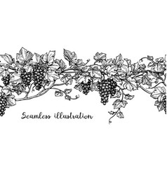 seamless grapevine sketch vector image vector image