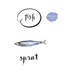 sprat silver fish vector image