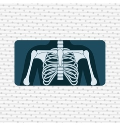 Human anatomy design vector