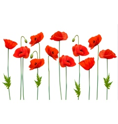 Beautiful nature poppy background vector