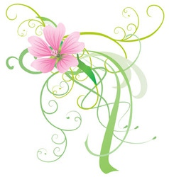 mallow flower vector image vector image