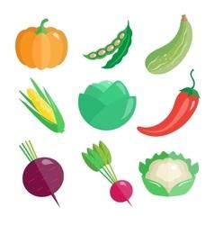 Set of Fresh Vegetables vector image vector image
