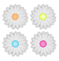 white daisy flower on white background vector image