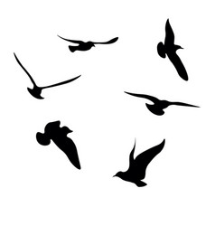 Black seagulls silhouettes collection vector