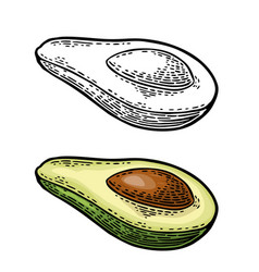 half avocado with seed vintage engraved vector image vector image