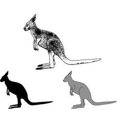 kangaroo sketch and silhouette vector image