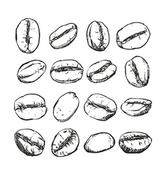 Coffee bean Isolated Hand drawn sketch vector image vector image