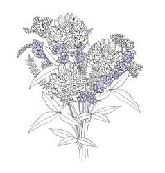 Bouquet from field herbs planimetric vector