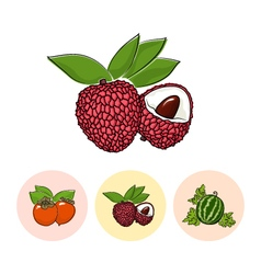 Fruit icons lichee  persimmon  watermelon vector