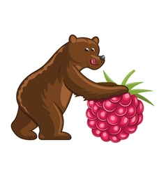 Bear with raspberry vector image vector image